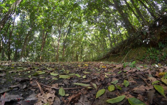 Reclaman al DRNA prestarle atención al Bosque de Vega Alta