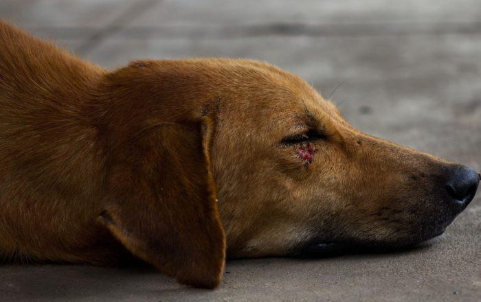 Hieren de bala a un perro en Cayey