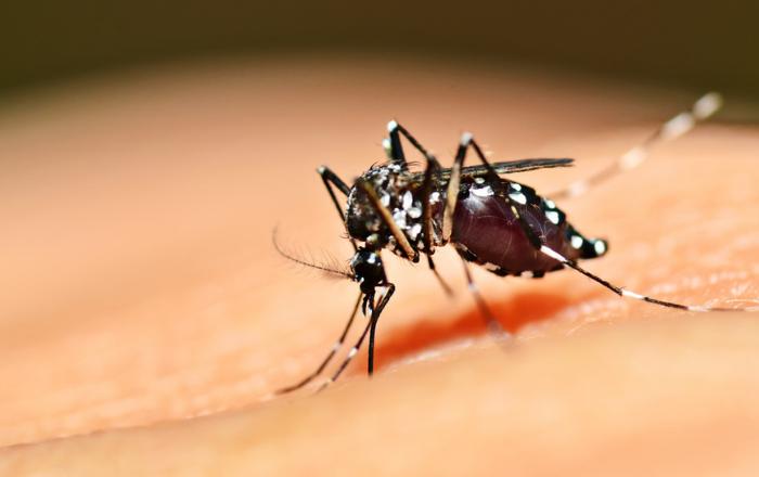 Salud aclara que se equivocó con estadísticas del dengue