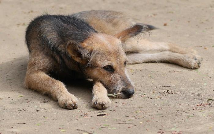 Someten proyecto para rescatar animales abandonados en Salinas