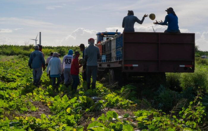 Programa del PAN no atrae al obrero agrícola