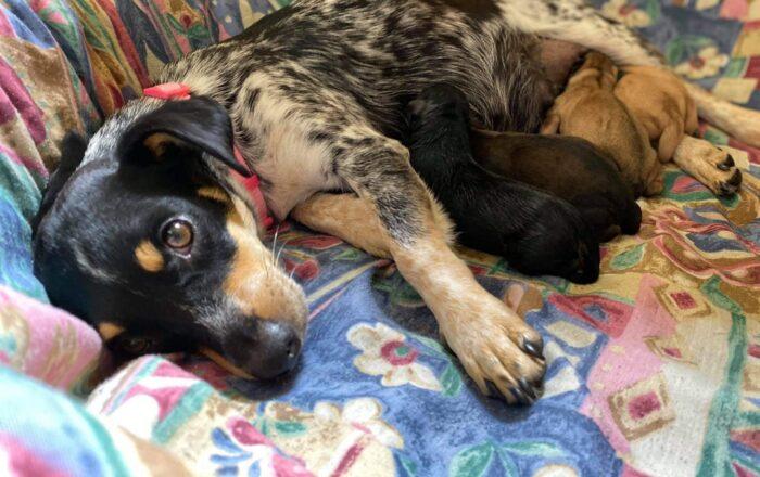 Santuario de Animales pide ayuda para atender y costear gastos de cachorros rescatados